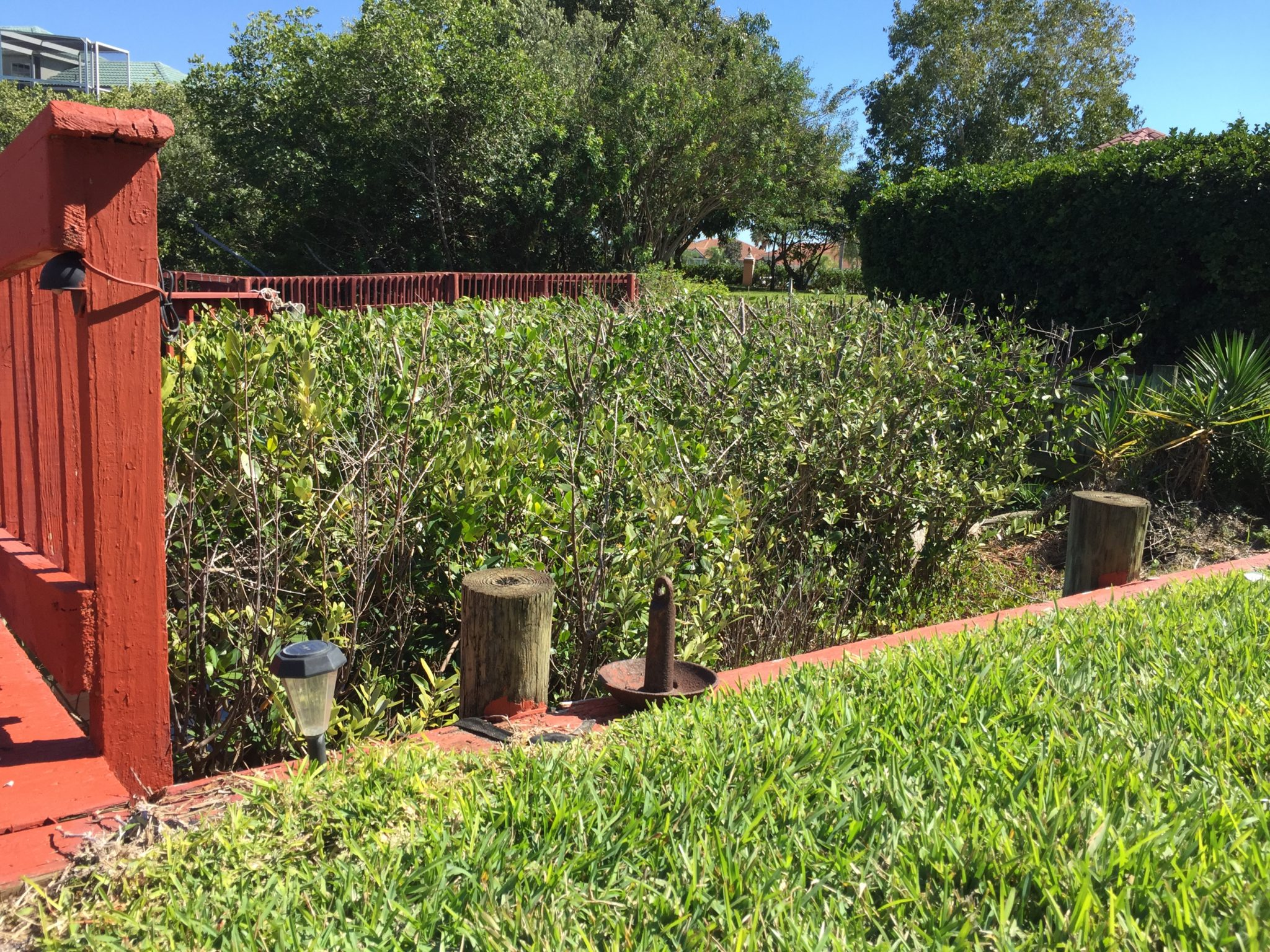 A mangrove hedge we created behind an Apollo Beach house. This was approved by EPCHC.