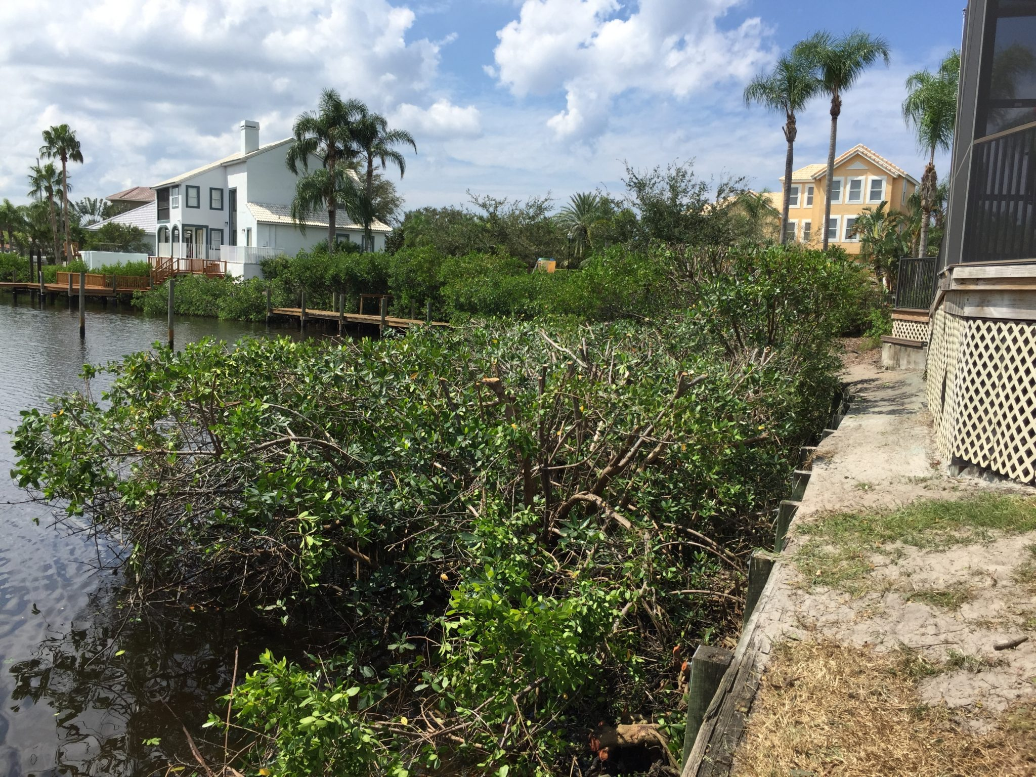 We trimmed the mangroves for the Symphony Isles Master Association along the beach and behind the clubhouse